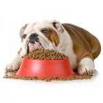 Hundefoder (foto: lavprisdyrehandel.dk)