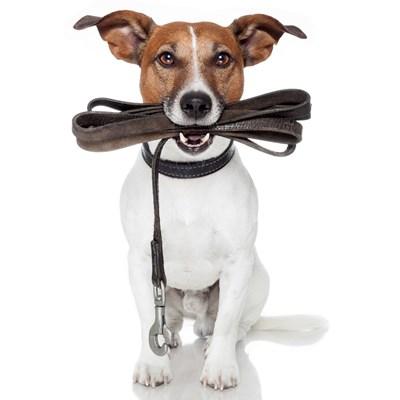 Hundesnor (foto: lavprisdyrehandel.dk)